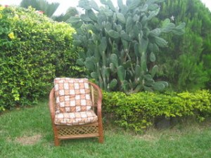 My reading place in my garden at home