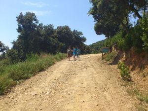 Walking in the Nature Park (Spain)